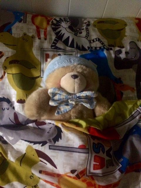 Teddy Steven in his forever home